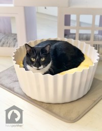 Modern Egg Tart Cat Bed from Pidan Wins for Best Photo Ops ...