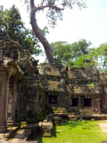 Ta Prohm Trees grown on top of the buildings