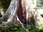 The biggest tree i ever did see, i gave it a hug :)