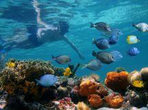 tortuga island Costa Cat Cruises