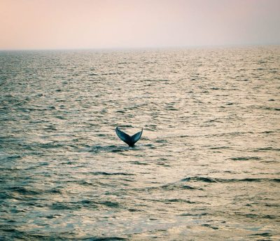 Whale Watching Cape Cod