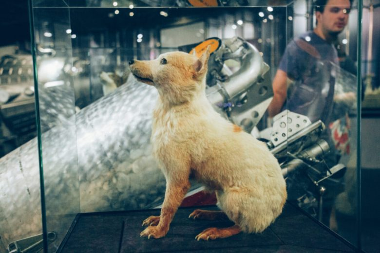 strelka space dog