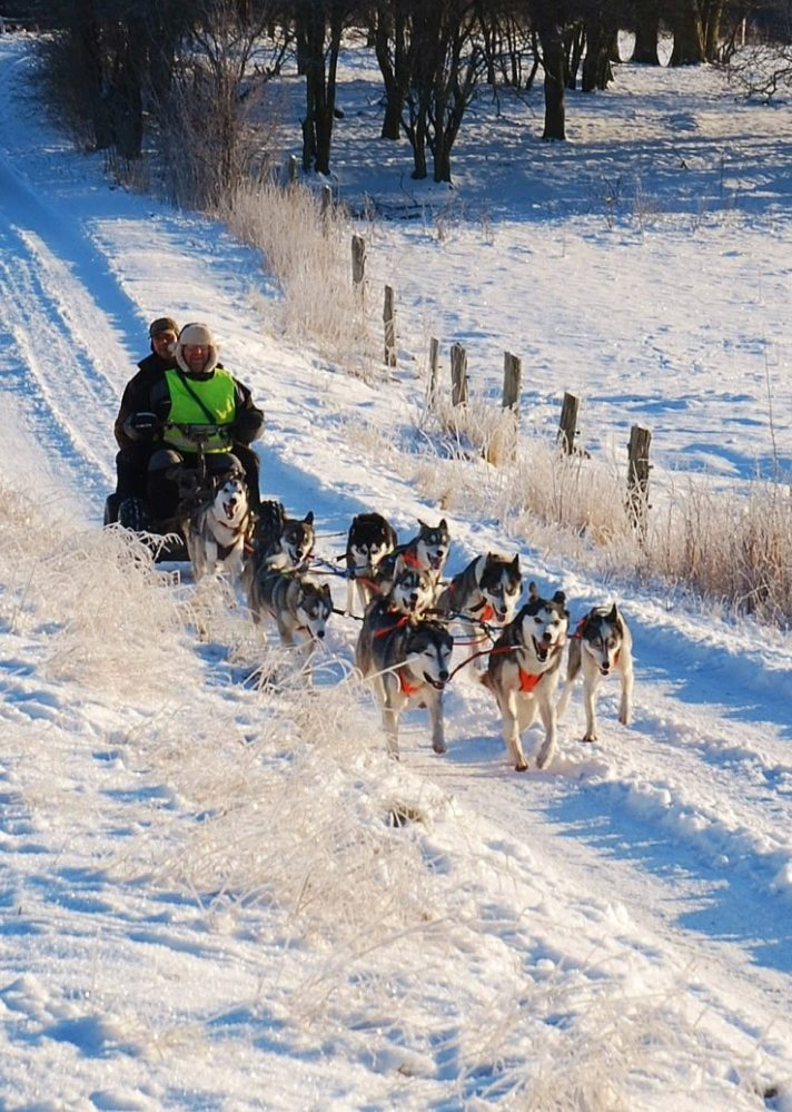 Dog sledding in Roskilde