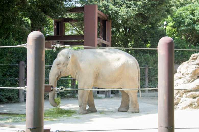 elephant at ueno zoo