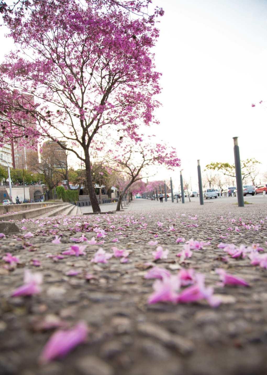 Rosario, Argentina in Spring