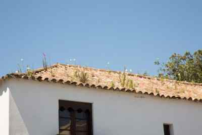 See the flowers growing out of the roof?
