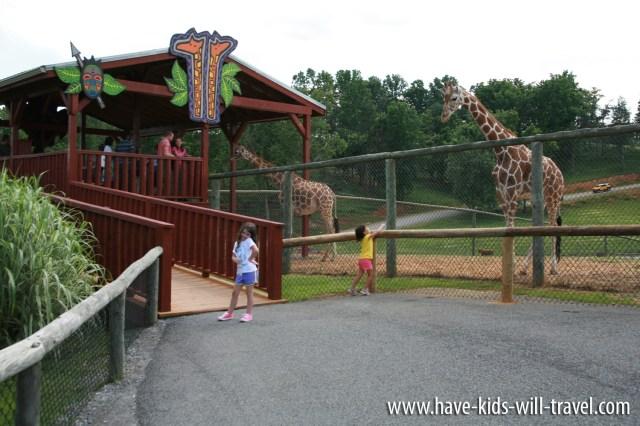 VA Safari Park 11