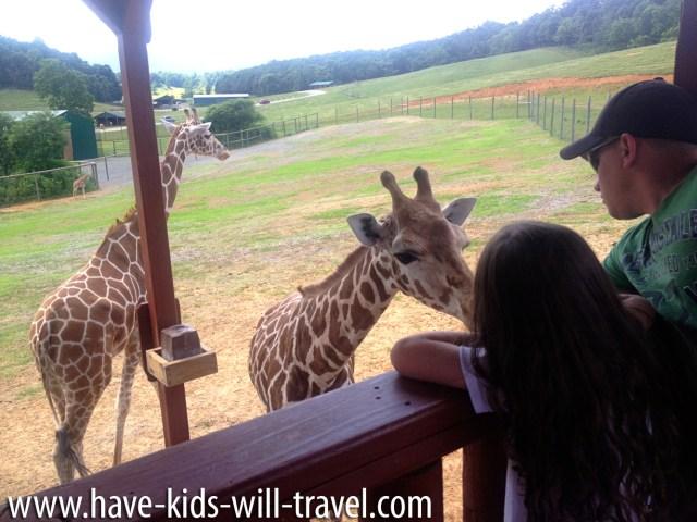 VA Safari Park 3