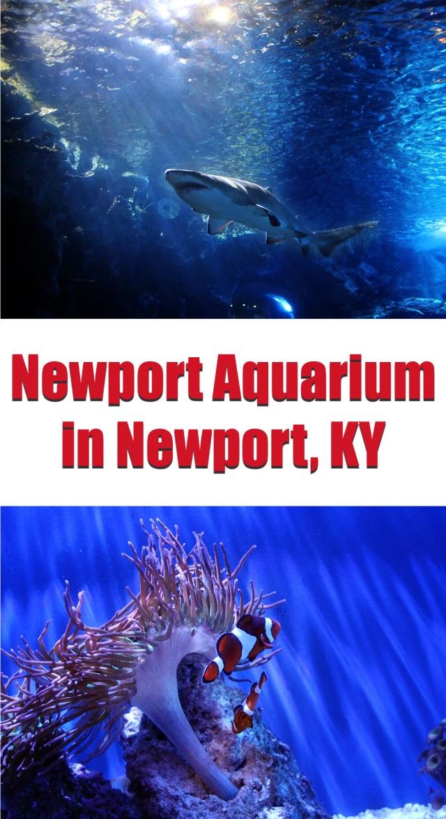 Newport Aquarium in Newport, KY