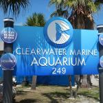 Visiting Clearwater Marine Aquarium with kids