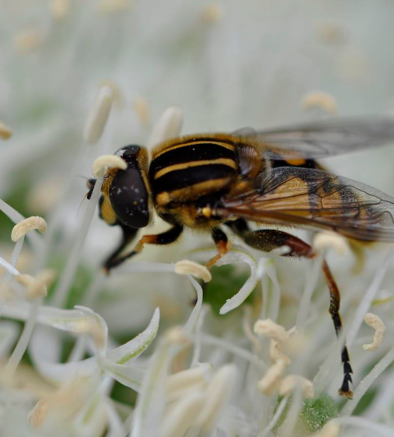 Smukt lille insekt