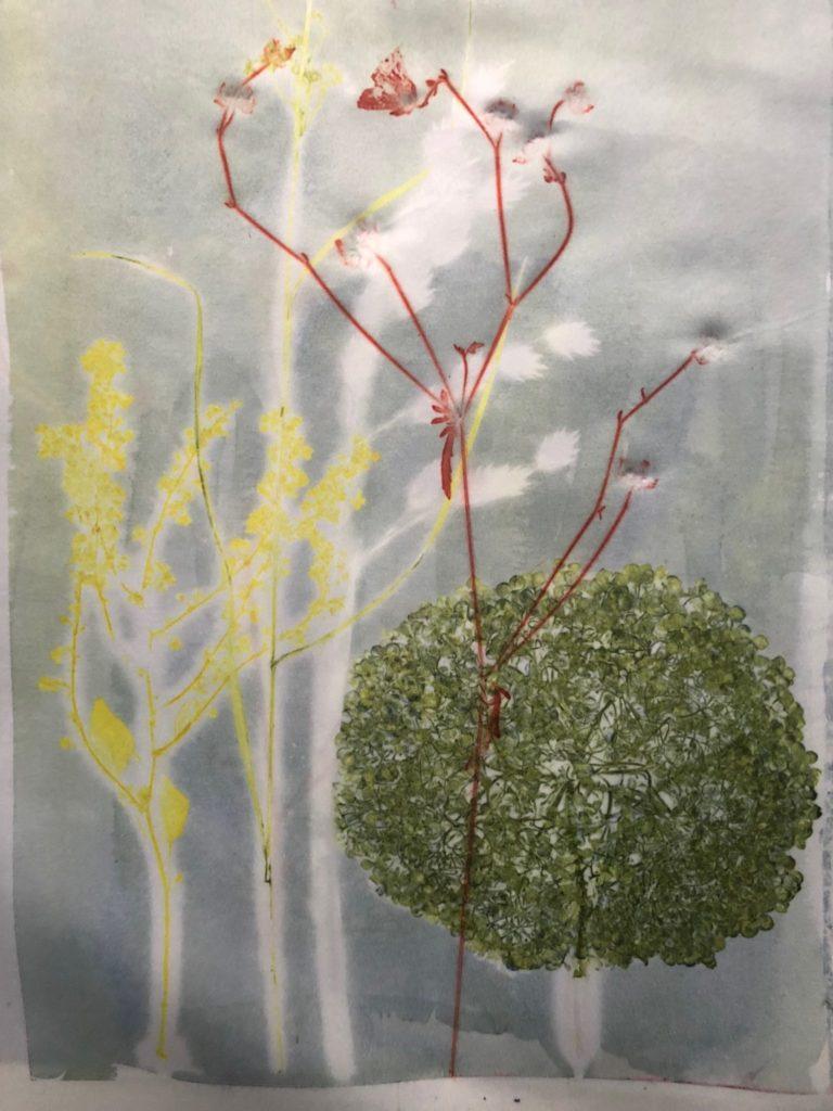 Plantetryk, Hortensia, Fallopia, Fladaks