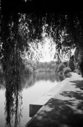 Porthill Footbridge Seen Through Willow, river severn, Shrewsbury