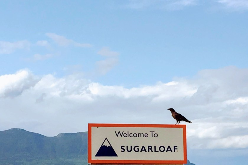 crow at Sugarloaf