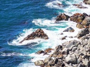 seals on big sur