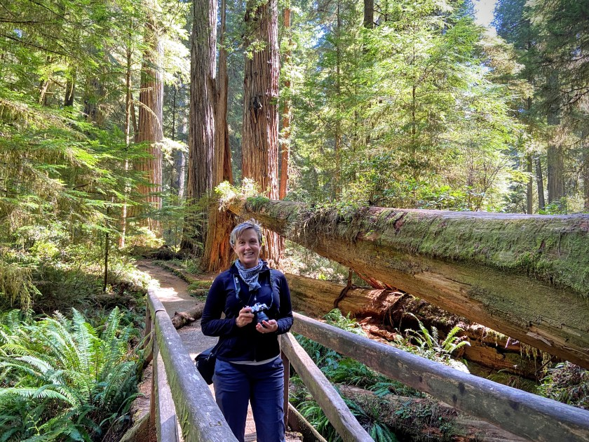 Rachel on a bridge in the redwood forest