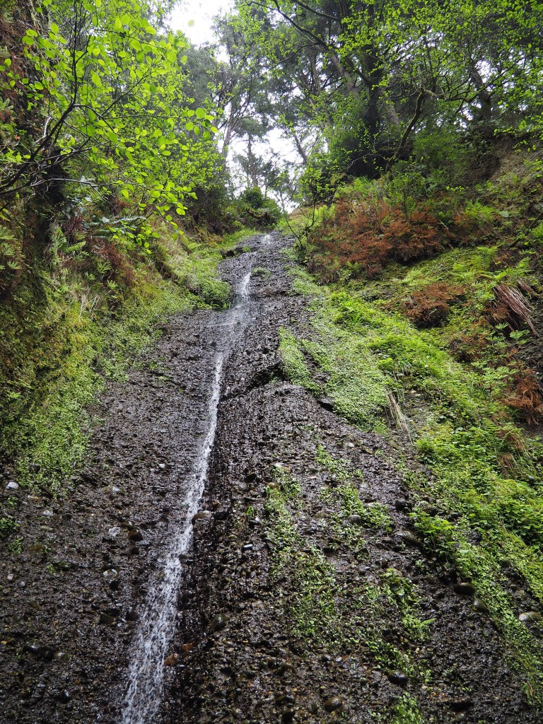 Narrow rocky cascade in the redwood forest.