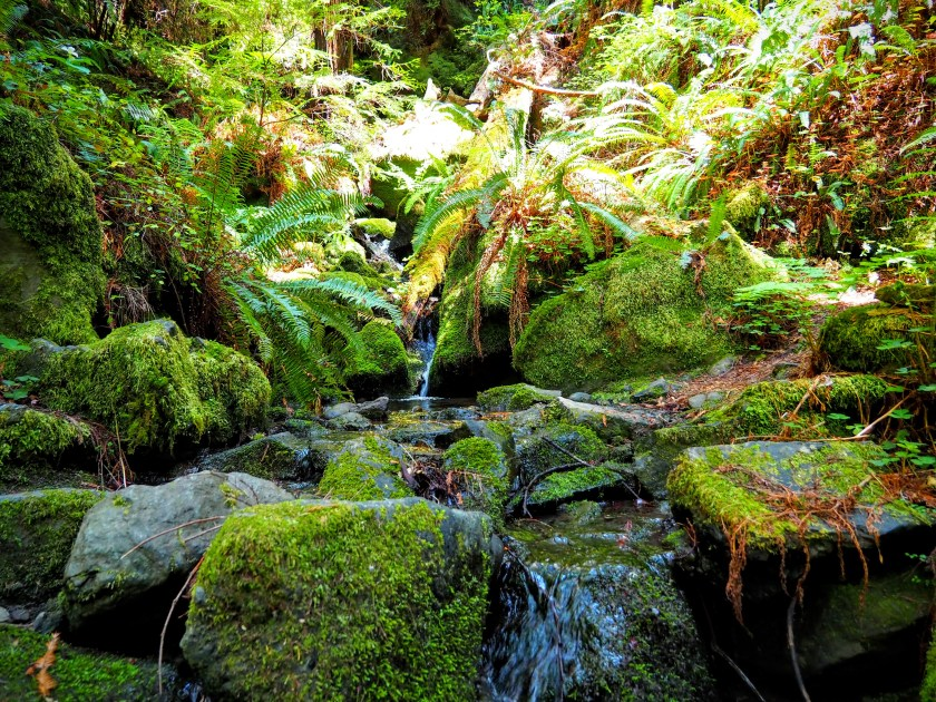 A small brook runs over mossy stones in the forest