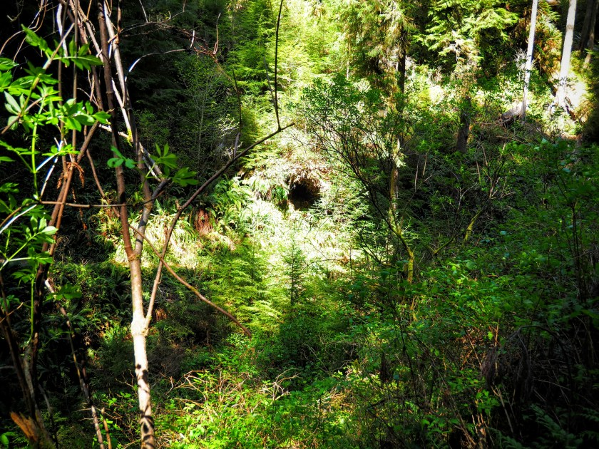 A dark hole is seen through the forest. What could live inside...?