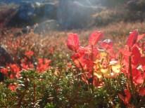 Fine høstfarger på fjellet