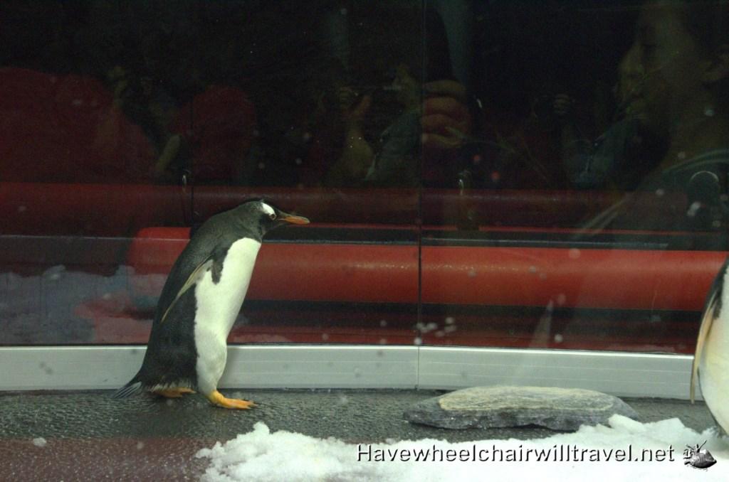 Sea Life Sydney Aquarium - penguin expedition