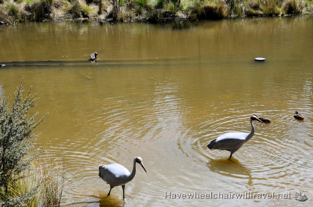 Tidbinbilla Nature Reserve - wheelchair accessible Canberra