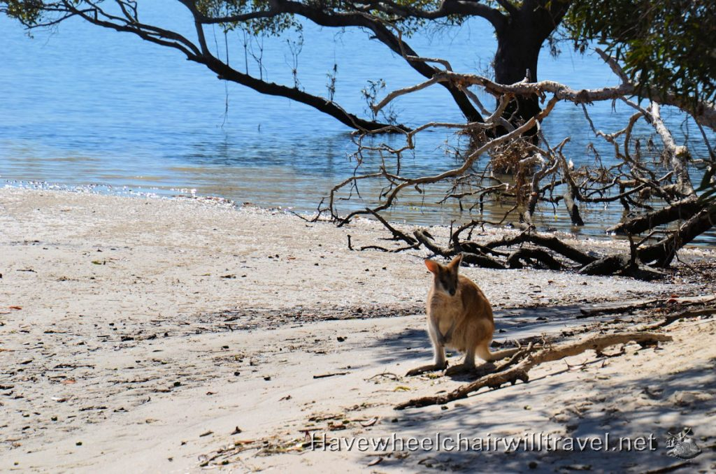 Wallaby Gold Coast Island Buggy Tour