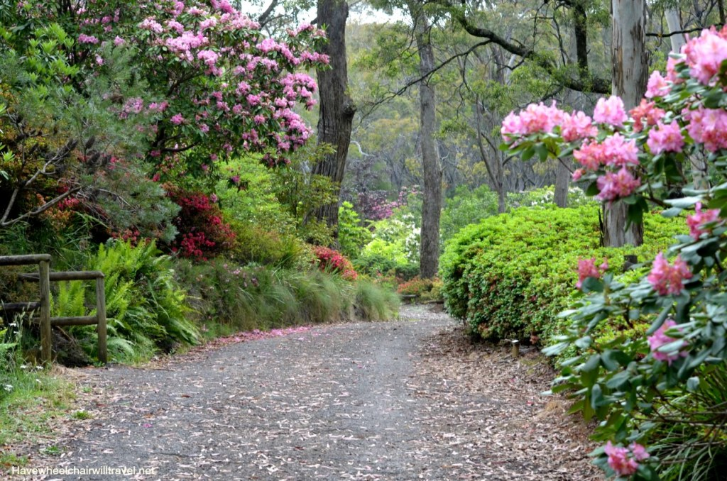 Campbell Rhododendron Garden - wheelchair accessible guide to Blue Mountains - Have Wheelchair Will Travel