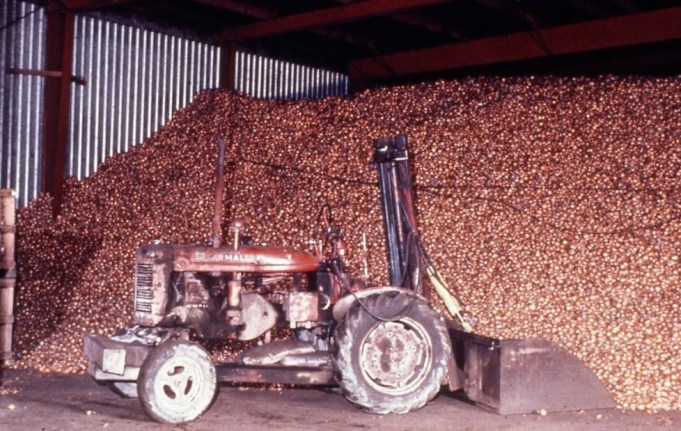 Bulk onion storage in NY 1979