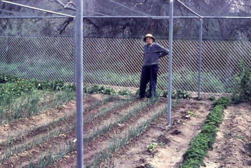 Jones in garden in 1980