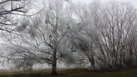 twizel-frozen-trees-2