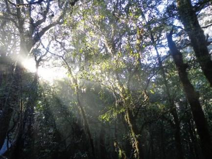 tree-near-the-chasm