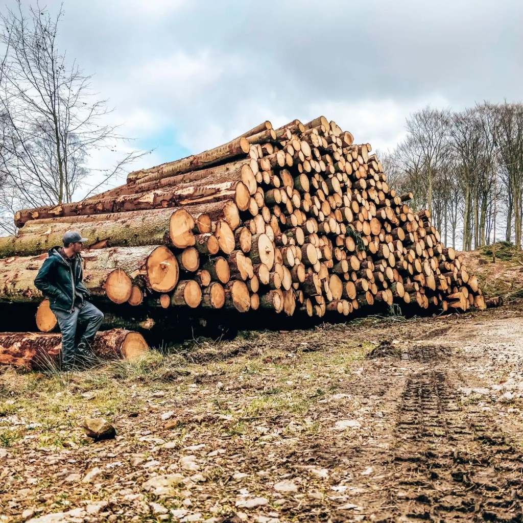 A man sits on a log, one of many logs is a massive pile, they have been cut down and are ready for transport to a lumber yard.