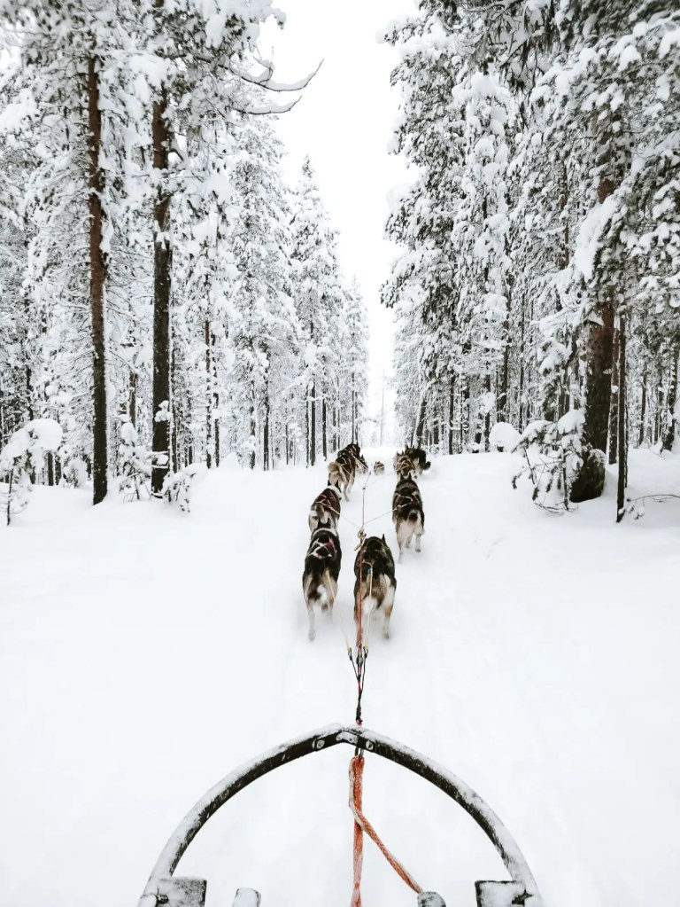 Sleigh pulled by husky dogs in Swedish Lapland.