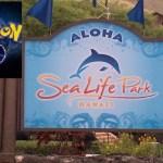 ハワイのシーライフパークで、「バック・トュー・スクール・ポケモン・ゴー」イベントが8/13(土)に開催されます。なんと、7ドルで入場できちゃいます!!ポケモンGOマニアはいかないと!旅行客の人もポケモンとシーライフパークを一緒に楽しんじゃおう!!