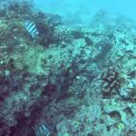 Nautilus Riff