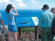 Wale beobachten hawaii Makapuu