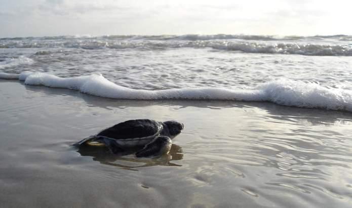 Wale und Schildkröten in Hawaii