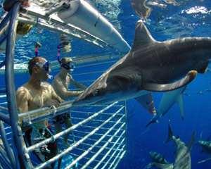 Hai tauchen Hawaii