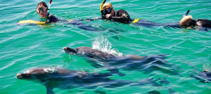 Schwimmen mit Delfinen in Hawaii