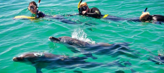 Schwimmen mit Delfinen Hawaii