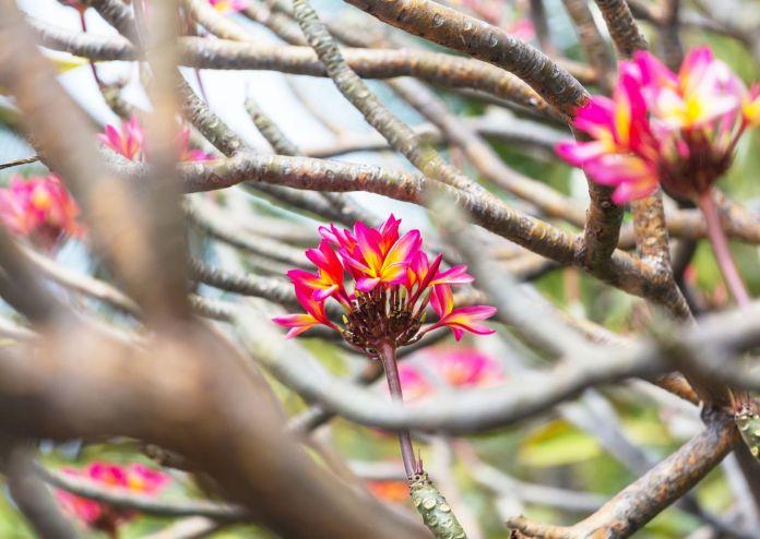 Botanische Gärten auf Big Island