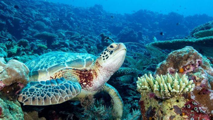 Schildkröten in Hawaii – Die besten Spots