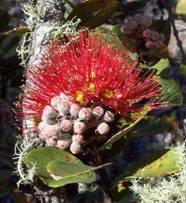Hawaiian Rainforest Naturals, Inc