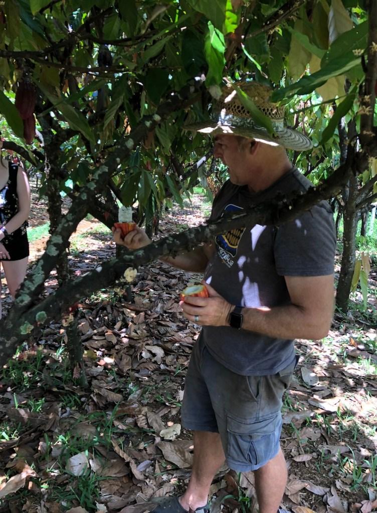 Dan Corson, Hamakua Chocolate Farm, cacao pod