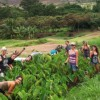 farming in hawaii - youth empowerment