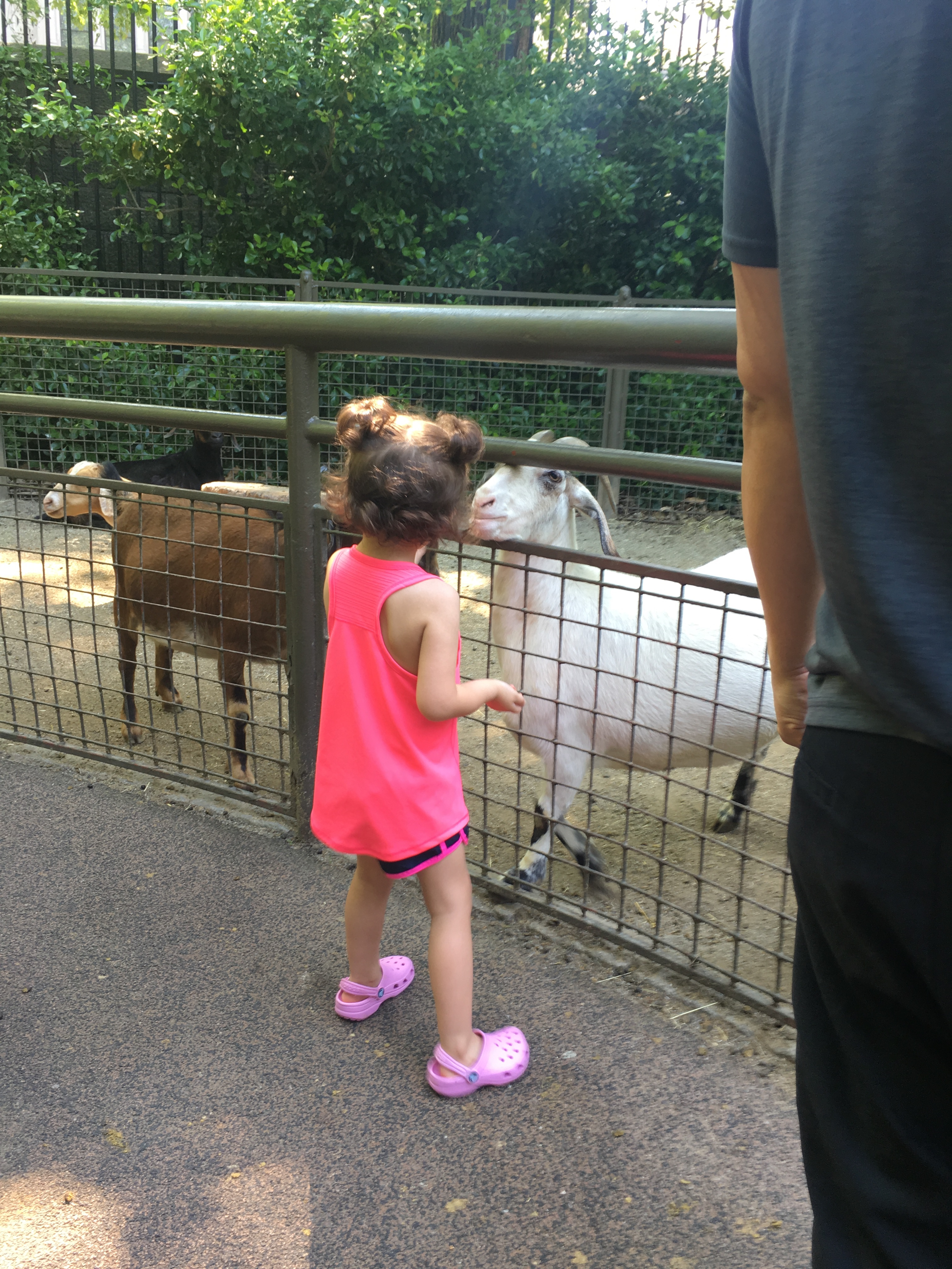 NYC Itinerary: Central Park Zoo