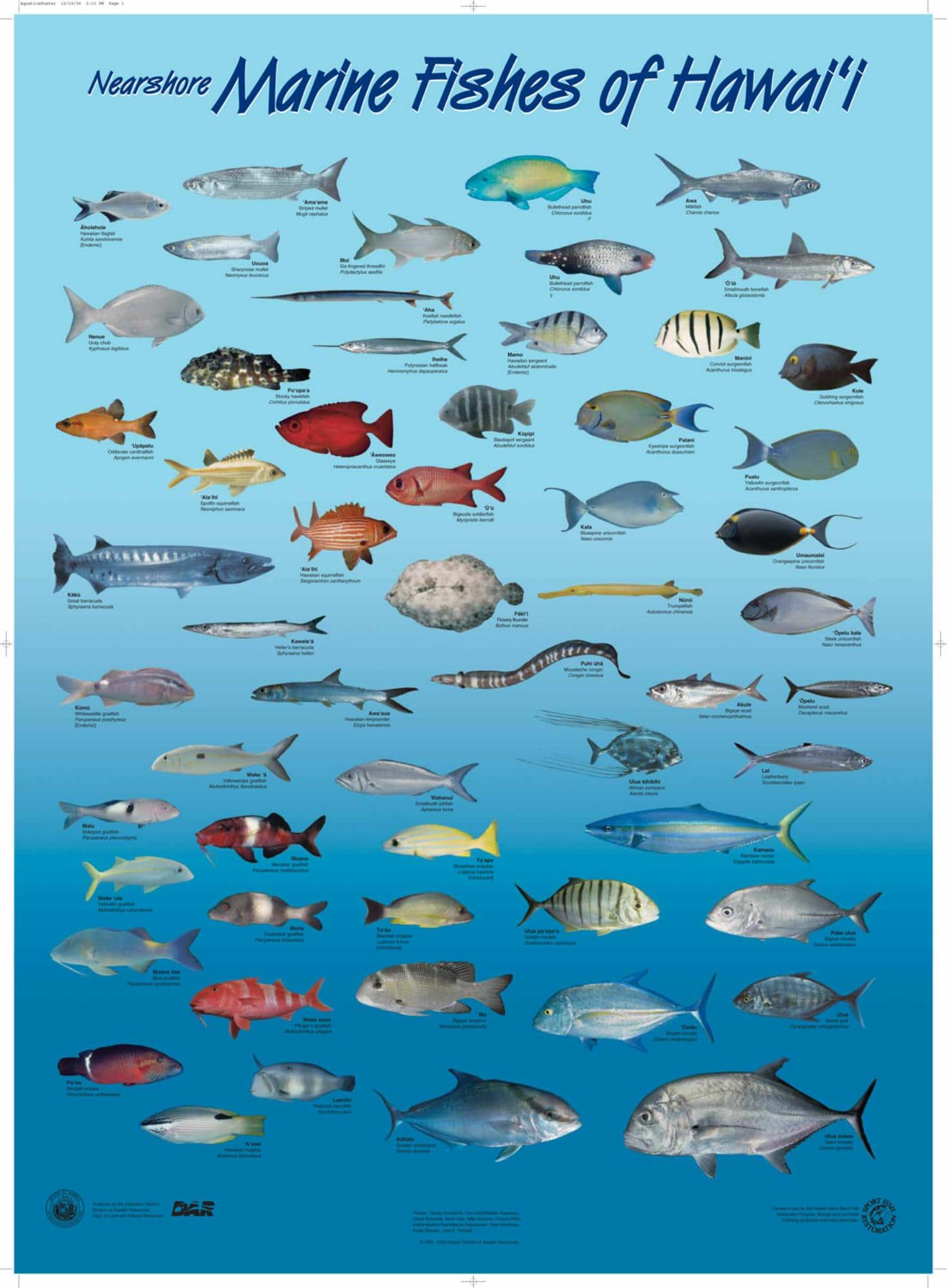 Hawaii Marlin Fishing  Hawaiian Species All