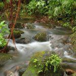 Creek in Akaka Falls State Park