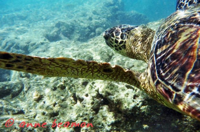 Hanauma Bay Snorkeling Adventure Half-Day Tour on Oahu